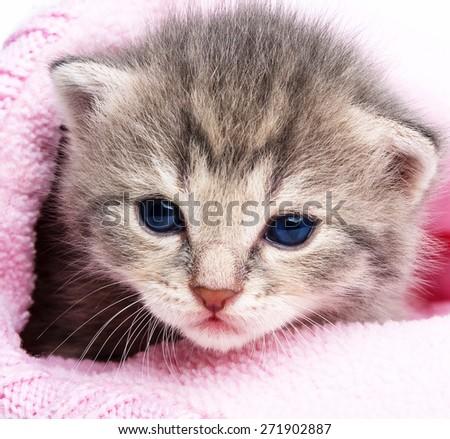 cute newborn kitten close up - stock photo