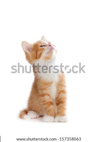 Cute orange kitten looking up isolated on white. - stock photo