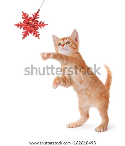 Cute orange kitten playing with a red Christmas snowflake ornament on a white background. - stock photo
