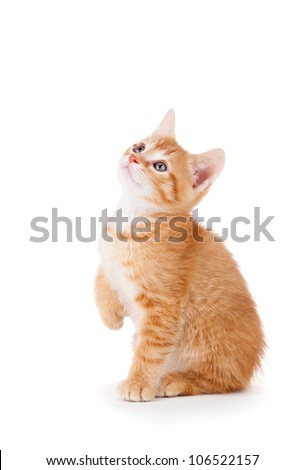 Cute orange kitten with large paws looking up on a white background. - stock photo