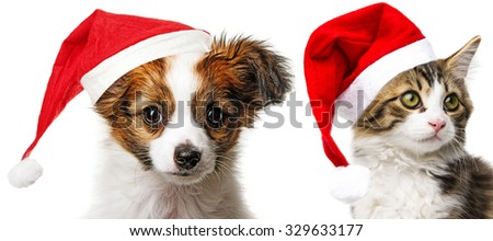 cute papillon puppy and cat with red santa cap - stock photo