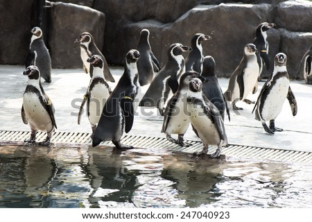 cute penguin in the zoo - stock photo