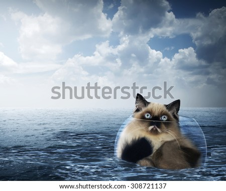 Cute persian cat inside glass bowl on the ocean with stormy weather - stock photo