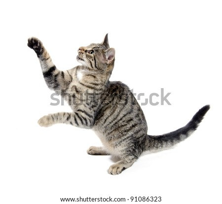 Cute pet tabby cat on white background - stock photo