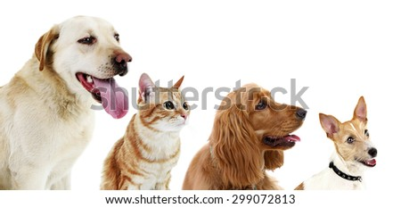Cute pets in row isolated on white - stock photo