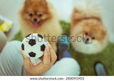 cute pets pomeranian dog happy playing ball in home, image used vintage filter - stock photo