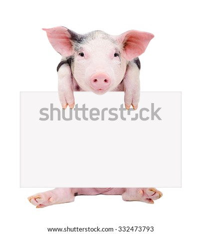 Cute piglet sitting with a banner isolated on white background - stock photo