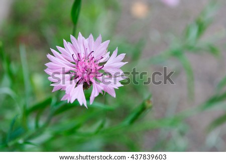 Cute pink flower. Background - stock photo