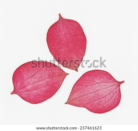 Cute pink leaf - stock photo