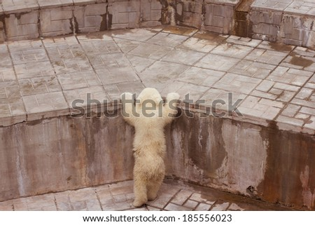 cute polar bear cub - stock photo