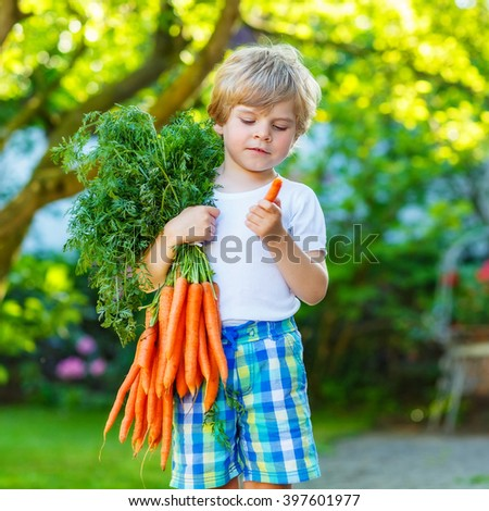 cute preschool blond little kid boy with carrots in domestic garden. Child gardening and eating outdoors. Healthy organic vegetables as snack for kids and kindergarten children - stock photo