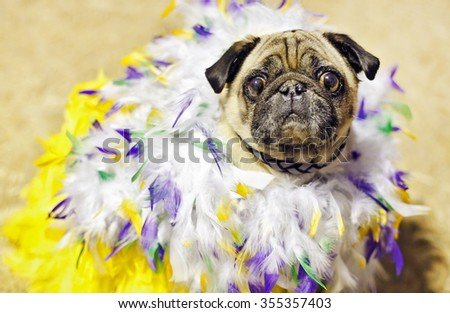 cute pug dog dressed in colored feathers - stock photo