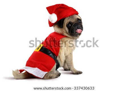 Cute pug puppy wearing a santa claus costume, Isolated over white - stock photo