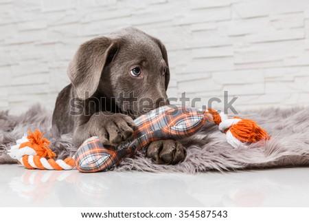 cute puppy - stock photo