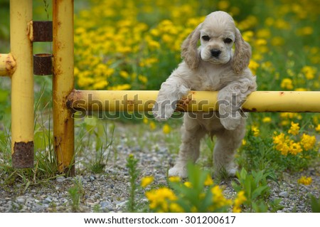 cute puppy - american cocker spaniel puppy with paws on metal fence - stock photo