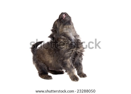 Cute puppy dog brown on white background - stock photo