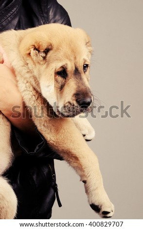 cute puppy dog isolated over grey background - stock photo