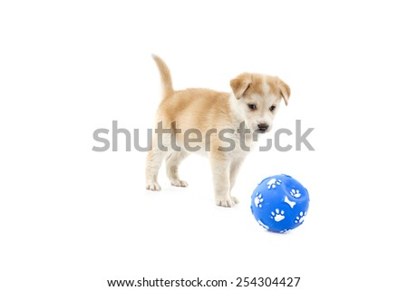 Cute puppy dog playing with a ball toy against a white background - stock photo