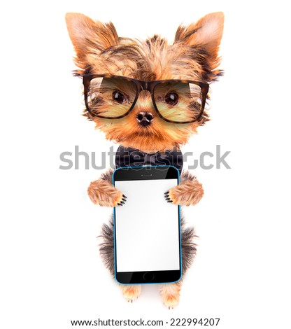 cute puppy dog wearing a neck bow and shades holding phone with empty white screen - stock photo