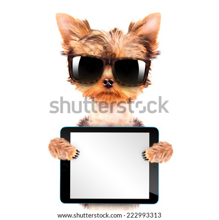 cute puppy dog wearing a shades holding a blank tablet pc  - stock photo