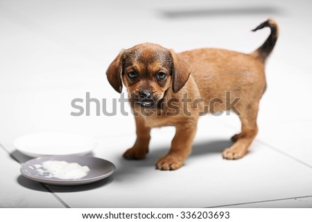 Cute puppy eating on floor at home - stock photo