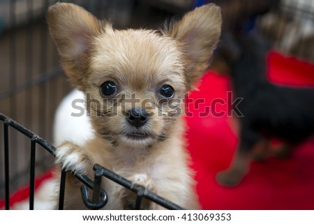 Cute puppy in a cage for sale on the pet market of Bangkok - stock photo