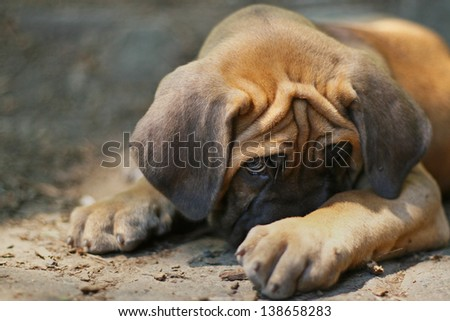 Cute puppy in trouble, hiding - stock photo