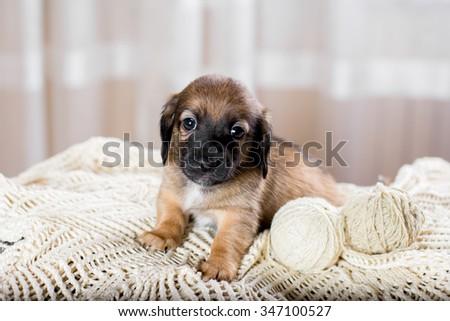 Cute puppy lying on the sofa and looking at the camera - stock photo