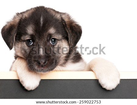 Cute puppy of 1,5 months old with a blackboard over white background - stock photo