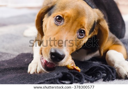 Cute Puppy on a cozy Blanket. Selective focus - stock photo