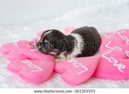Cute puppy on Valentine's Day with Pink hearton white background - stock photo