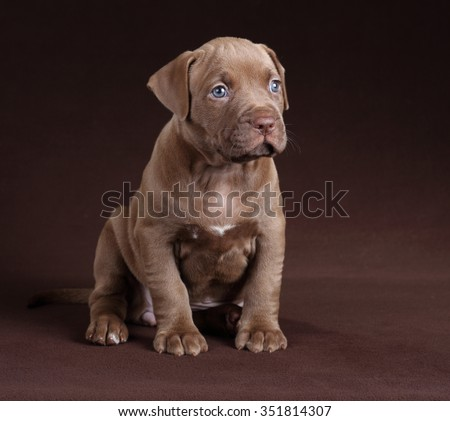 Cute Puppy sitting on a brown background - stock photo