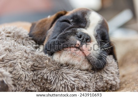 Cute puppy sleeping - stock photo