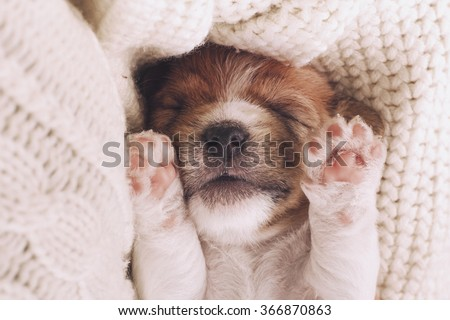 Cute puppy sleeping with his paws up on a knitted sweater. Cozy winter at home. Instagram filter - stock photo