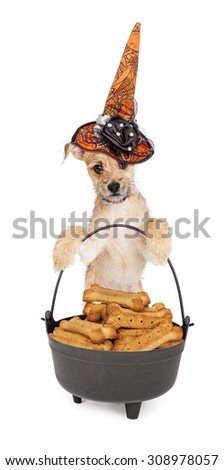 Cute puppy wearing a decorative orange witch hat while standing up and holding onto a black cauldron filled with large treats - stock photo