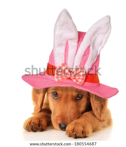 Cute puppy wearing an Easter bunny hat.  - stock photo