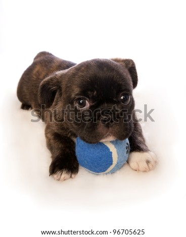 Cute puppy with blue ball isolated on white background - stock photo