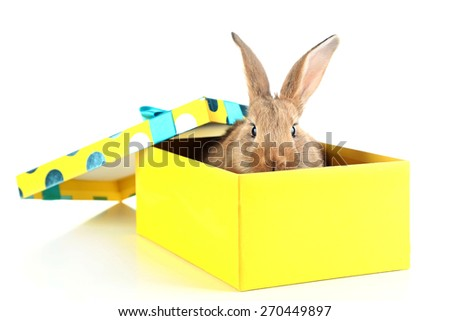 Cute rabbit in gift box, isolated on white - stock photo