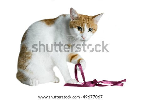 cute red and white cat with purple ribbon isolated - stock photo