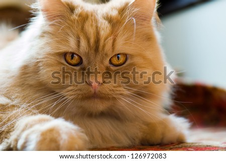 cute red cat brazen lying on the floor - stock photo