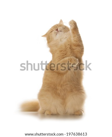 cute red cat isolated over white background - stock photo