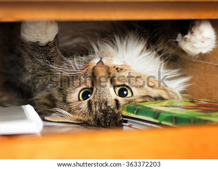 cute red cat lying in the closet on the shelf with things - stock photo