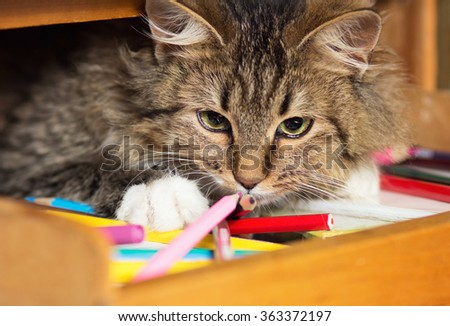 cute red cat lying on a shelf with colored pencils - stock photo