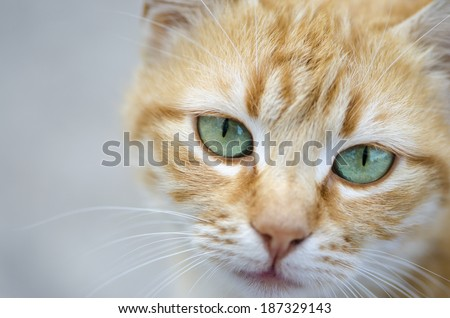 Cute red cat portrait - stock photo