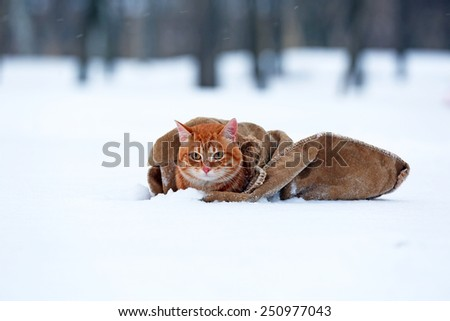 Cute red cat wrapped in blanket on snow background - stock photo