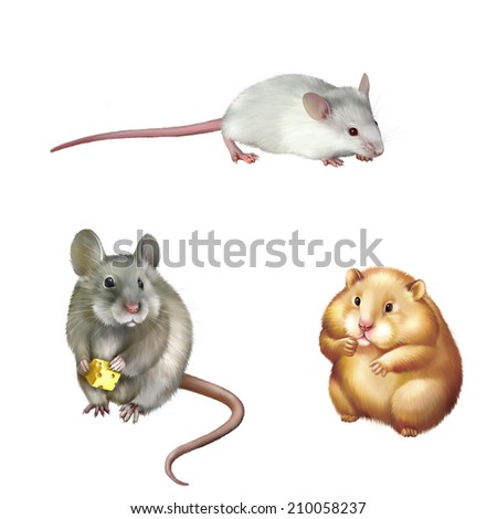 Cute Red Hamster Sitting House Mouse Eating Piece Of