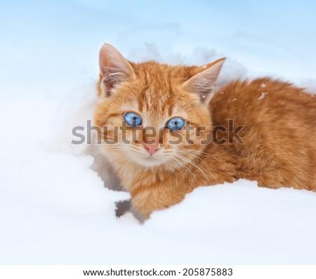 Cute red kitten in snow - stock photo