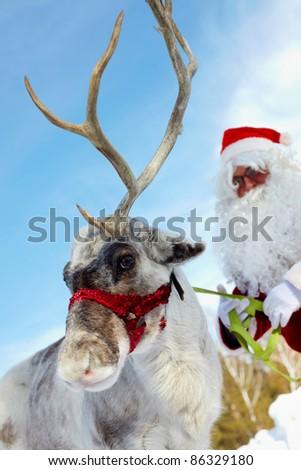 Cute reindeer and Santa Claus behind - stock photo