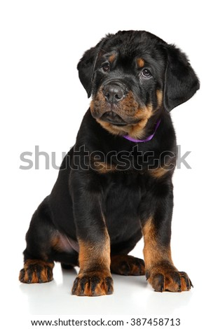Cute Rottweiler puppy on white background - stock photo