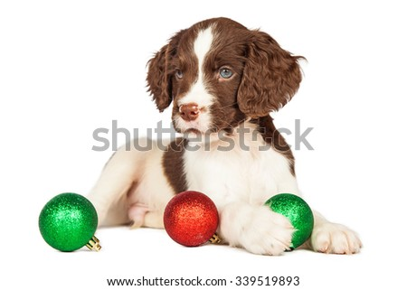 Cute seven week old puppy with red and green Christmas ornaments - stock photo
